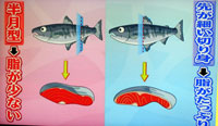世界一受けたい授業 鮭の切り身の選び方