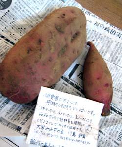 無農薬野菜ミレーのさつま芋