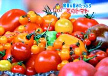 はなまるマーケット トマト