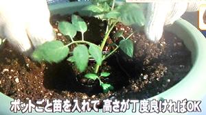 失敗しない家庭菜園の始め方(はなまるマーケットより)